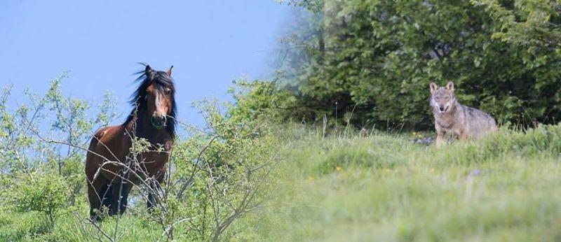 Sulle tracce dei cavalli selvaggi e del lupo - Consorzio ...